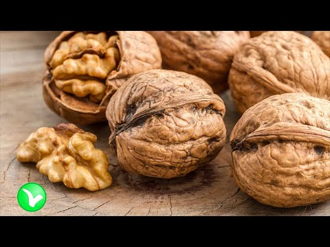 Чем полезны грецкие орехи? Кому нельзя употреблять орехи и почему?