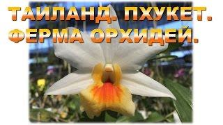 видео Тайланд - страна орхидей?