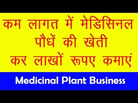 कम लागत में मेडिसिनल प्लांट लगाकर लाखों की कमाई करें  || Medicinal Plant Business in Hindi