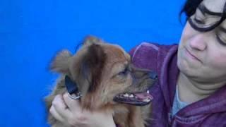 Keiko A4202980 Adopted!!!