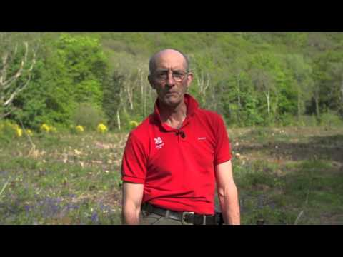 Fingle Woods: Mick Jones (Lead Ranger for National Trust in the Teign Valley)