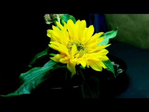 Post Malone, Swae Lee - Sunflower (SYNTH POP COVER)