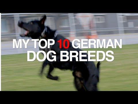 MY TOP 10 GERMAN DOG BREEDS