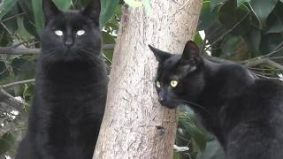 funny black cat family - dad and his sons on the wall in the backyard