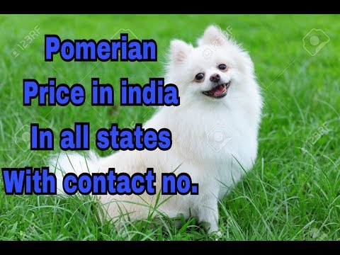 Pomerian price in india in all states with contact no. || price in india ||