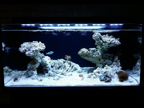 Setting the stage: creating my reef aquascape