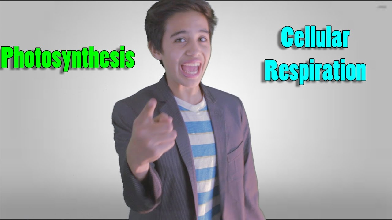 Photosynthesis & Cellular Respiration Project?