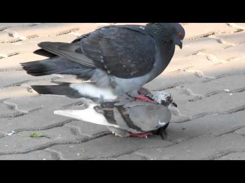 Ребята-голубята