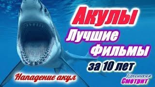 Акулы. Фильмы про акул. Лучшие фильмы про нападение акул. 8 фильмов за 10 лет