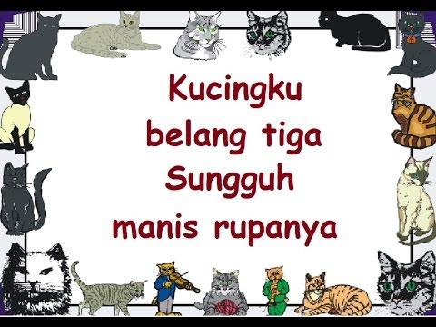 KUCINGKU BELANG TIGA (LIRIK) - Lagu Anak - Cipt. Pak Kasur - Musik Pompi S.