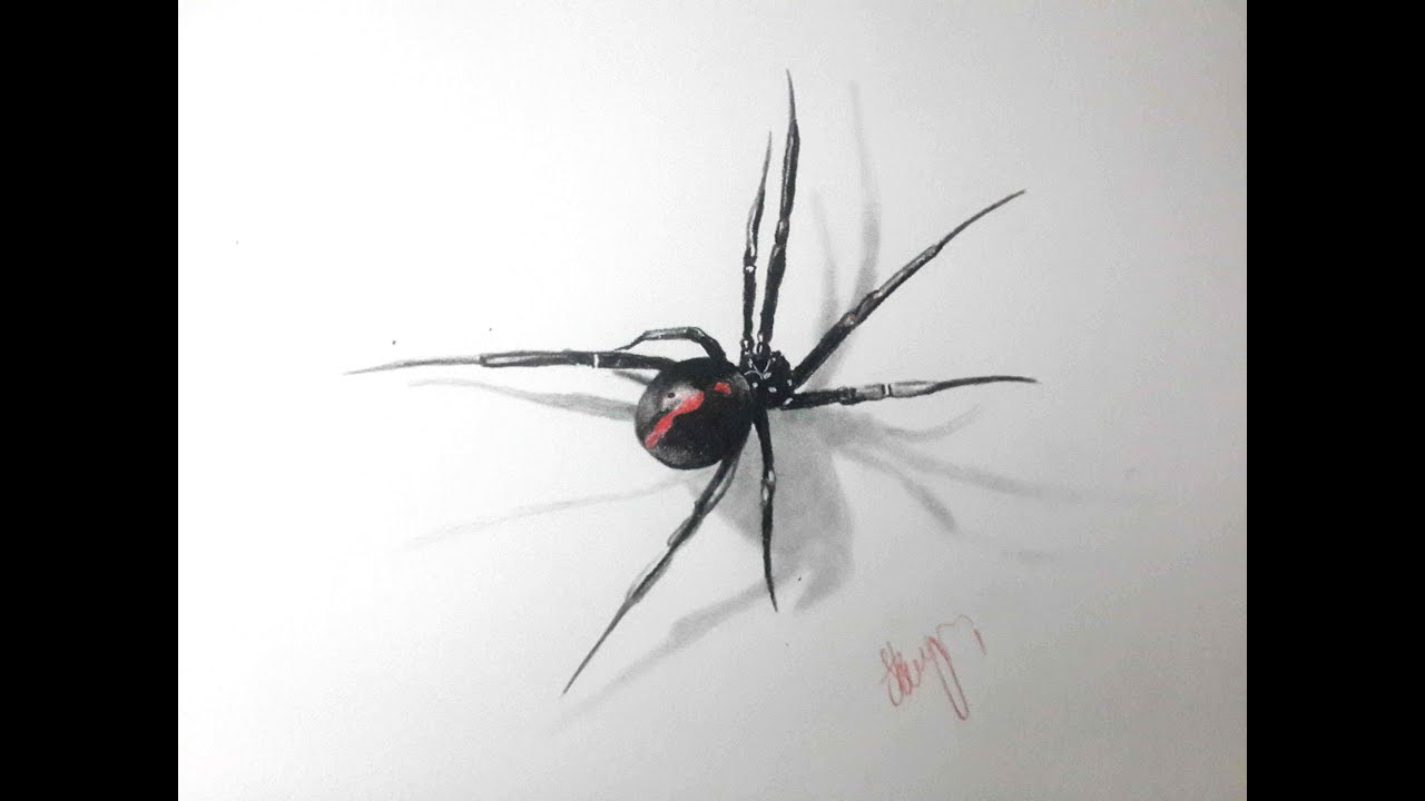 Uncategorized How To Draw Spiders 3d spider drawing youtube