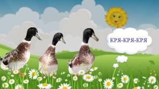 Говорят птицы (голоса птиц). Наши уточки с утра... / Talking birds cartoon. Наше_всё!