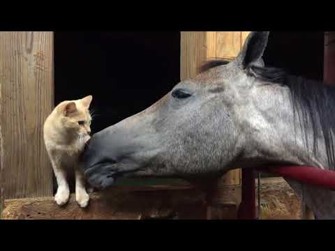 Horse Grooms Cat With Tongue - 986429 from YouTube · Duration:  1 minutes 31 seconds