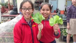 Publication Date: 2020-07-21 | Video Title: 林村公立黃福鑾紀念學校天台苗圃