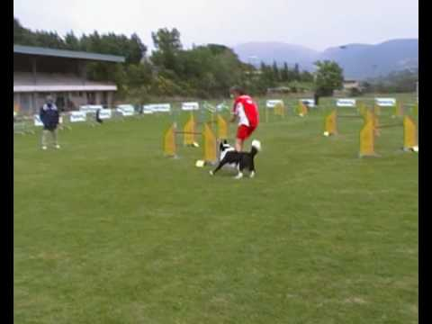 jumping agility dog www.petrademone.it