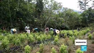 Entre la coca y la chatarra: los trabajos más peligrosos de los venezolanos en Colombia