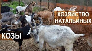 Козы в хозяйстве Натальиной-Степанова