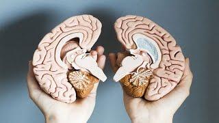 أي فص من دماغك تستخدمه أكثر الأيمن أم الأيسر ؟