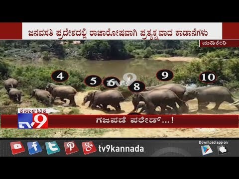 OMG: 23 Elephants Captured in Camera While Drinking Water