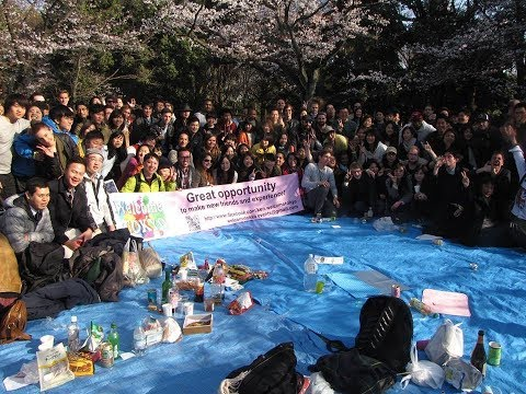 International Big Hanami Picnic official Meetup welcomeTokyo 国際交流お花見代々木公園Free cheese cakeチーズケーキ