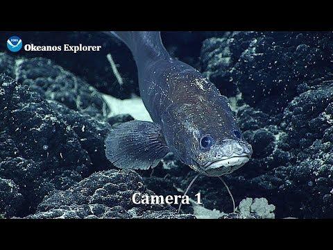 Camera 1: Gulf of Mexico 2018