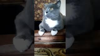 Кот облизывается и хочет съесть второго кота