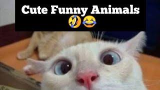 Cute Funny Animals 😂