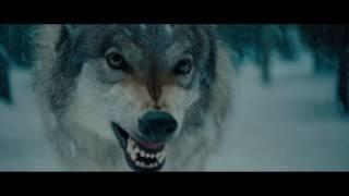 Избавился от жучка при помощи волка.