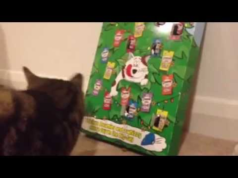 Charlie The Cat - Discovers His Dreamies Advent Calendar At Christmas 2012