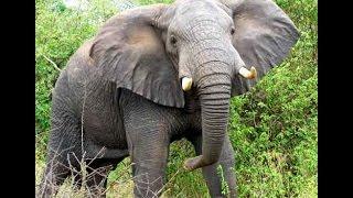 10 самых крупных животных в мире