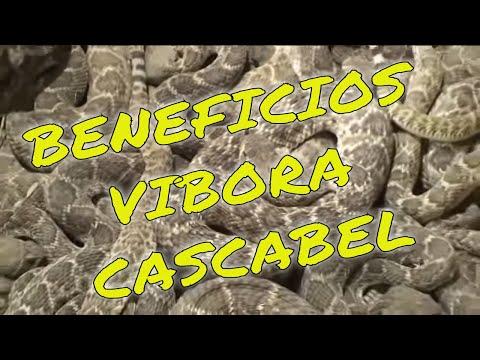 Beneficios de #ViboradeCascabel #SweetwaterTexas #LenteViajeroUSA