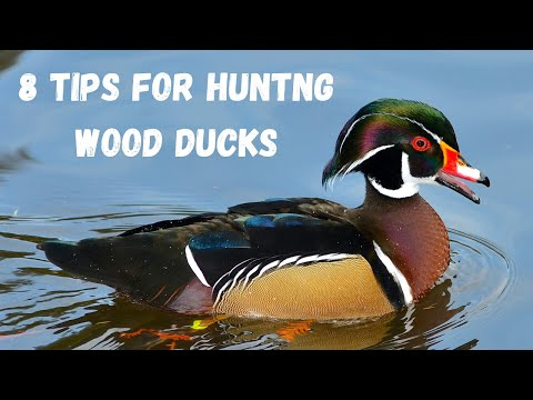 8 Tips For Wood Duck Hunting