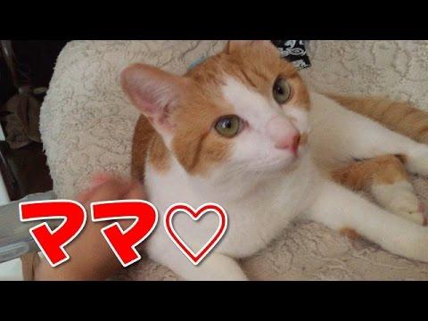 ママ大好き!甘えんぼうの猫【ヒョウくん】Spoof dog cat【Cute dogs and cats】