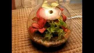 Florarium_Svet.wmv(Этот необычный светильник способен принести в ваш дом свет и тепло от растений которые очень уютно располо..., 2012-04-15T02:33:20.000Z)