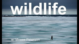 Wildlife Photo Review with MOOSE PETERSON!