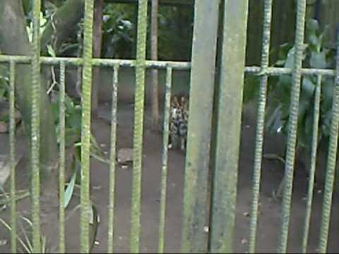 Sad reality, Simon Bolivar Zoo in San Jose, Costa Rica