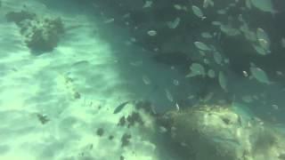 snorkeling cala n bosh