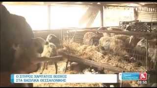Ο Σπύρος Χαριτάτος ανειδίκευτος εργάτης σε στάνη με πρόβατα