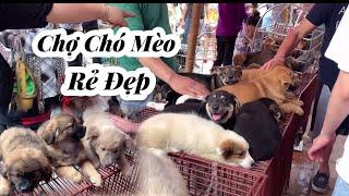 Chợ Chó Mèo Cảnh độc đáo Miền Bắc giá rẻ | The most beautiful cat and dog market in the North | GoTv