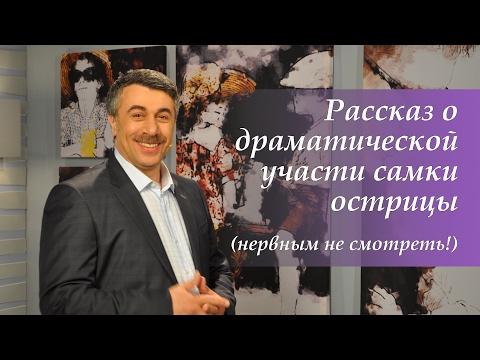 Рассказ о драматической участи самки острицы (нервным не смотреть!) - Доктор Комаровский