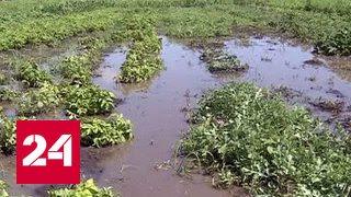 В Приморье из-за паводка 700 человек остались без света, подтоплены 32 села