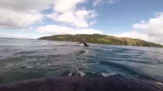 Gulf of corryvreckan swim 2014