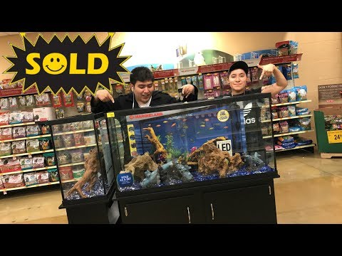 HELP!!! FOUND MY PERFECT MATCH AT PETSMART!!!?? (AQUARIUM)