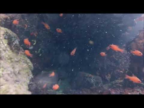 Apogon Imberbis Mediterranee Fish