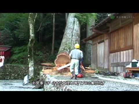 cut trees 400 years old || tree cutting machine