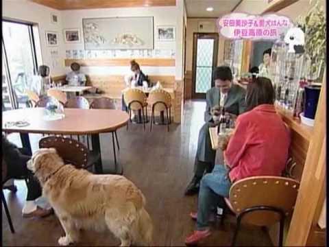 ドッグカフェ K - YouTube