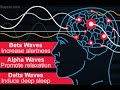 Types of Brain Waves and Their Functions