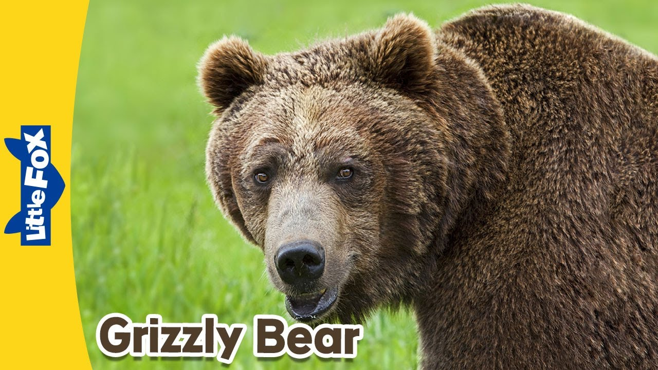 animals fox meet bear grizzly animated wild stories