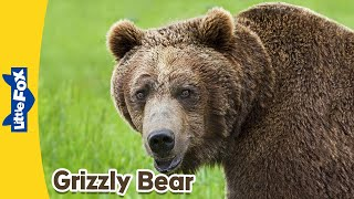Meet the Animals 5: Grizzly Bear | Level 2 | By Little Fox