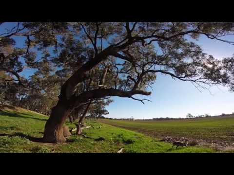 Victorian Duck Shooting Season 2016  (Australia)